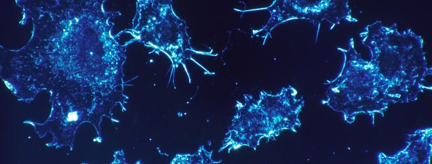 spirulina and cancer